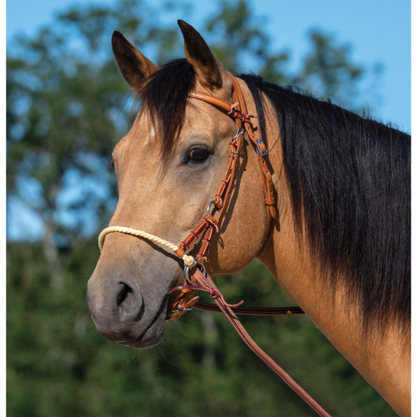 EQUIPHORSE_SIDE-PULL WESTERN ABSTANG_1