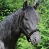 812f01-noir